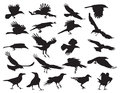 Moving silhouettes of crows on a white background set illustrations eps Royalty Free Stock Photos