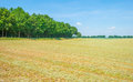 Mowed grass on a field in sunlight Royalty Free Stock Photo