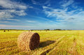 Mown field with straw bales Royalty Free Stock Images