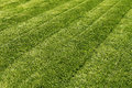 Mown green grass Royalty Free Stock Photo