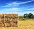 Mown hay harvested in large briquettes Royalty Free Stock Images
