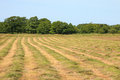 Mown hayfield on a summer day in the middle of hot Royalty Free Stock Image