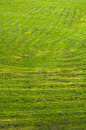 Mown lawn Royalty Free Stock Images