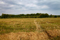 Mown wheat field and sky with thunder clouds Royalty Free Stock Photo