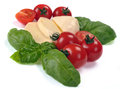 Mozzarella cherry tomatoes basil on a white plate Stock Image
