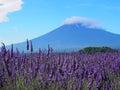 Mt 富士和淡 色在川口湖边 免版税库存图片
