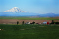 Mt adams overlooks farm new grain crop growing in foreground of a with in the distance under blue skies red barn plowed field and Stock Image