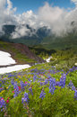 Mt bagare wildflowers Royaltyfri Bild