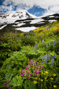 Mt bagare wildflowers Arkivbilder