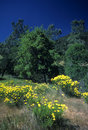Mt. Diablo springtime Stock Photography