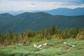 Mt evans scenery near treeline at in colorado Royalty Free Stock Images