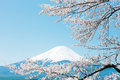 Mt fuji with cherry blossom Stock Photos