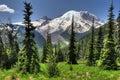 Mt. Rainier from Sunrise Royalty Free Stock Photo