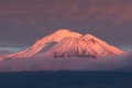 Mt Shasta with alpenglow Royalty Free Stock Photo