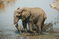 Mud bath elephant Stock Images