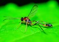 Mud dauber wasp perched on a green leaf Stock Photos