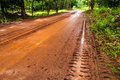 Mud Road trough rubber plantation Royalty Free Stock Image