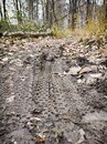 Mud tracks on a mountain bike trail Royalty Free Stock Photo