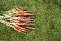 Muddy carrots on grass Royalty-vrije Stock Fotografie