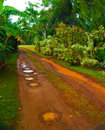 Muddy Country Road in Tropics Royalty Free Stock Photo