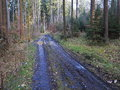 Muddy forestry road a through a german fir forest at spring Royalty Free Stock Photography