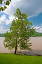 Muddy Ohio River Royalty Free Stock Photo