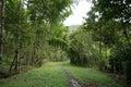 Muddy path in the jungle