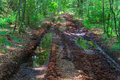 Muddy path road with tire tracks in a forest Stock Image