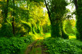 Muddy road through fairytale forest overgrown with creepers Stock Images