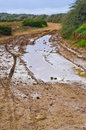 Muddy road a typical in the maltese countryside Royalty Free Stock Photography