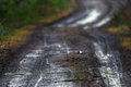 Muddy rural dirt road in a forest with shallow depth of field Stock Photography