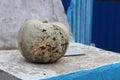 Muddy white Lumina pumpkin Royalty Free Stock Photo