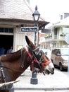 Muestra de calle de Bourbon con la mula New Orleans Foto de archivo libre de regalías