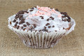 Muffins with chocolate chips Royalty Free Stock Photos