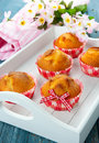 Muffins on a tray Stock Images