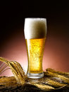 Mug of beer foamy poured into the jug Royalty Free Stock Images