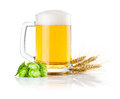 Mug beer with Green hops and ears of barley Royalty Free Stock Images