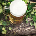 Mug with Beer with hop Royalty Free Stock Photo