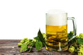 Mug with Beer with hop on wooden table isolated Royalty Free Stock Photo