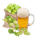 Mug of beer and hops Royalty Free Stock Photo