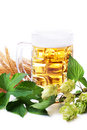 Mug of golden beer with hop leaves and wheat over white Stock Image