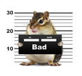 Mugshot background with rodent bad animal concept Royalty Free Stock Image