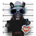 Mugshot dog bavarian with an empty blank banner Royalty Free Stock Images
