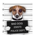 Mugshot of wanted dog holding a banner Royalty Free Stock Image