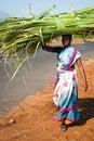 Mujer india en bala de heno de la sari que lleva colorida en la cabeza Imagen de archivo