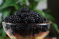 Mulberries in a glass bowl ripe Stock Photography