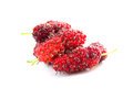 Mulberries isolated on white background Royalty Free Stock Photo