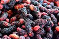 Mulberry background, black ripe and red unripe mulberries Royalty Free Stock Photo