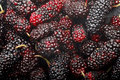 Mulberry close-up Royalty Free Stock Photography
