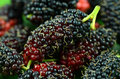 Mulberry fruits. Royalty Free Stock Images
